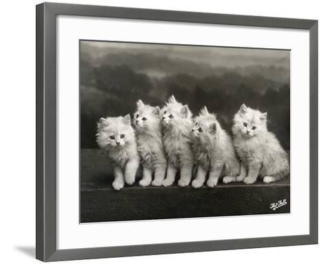Row of Five Adorable White Fluffy Chinchilla Kittens-Thomas Fall-Framed Art Print
