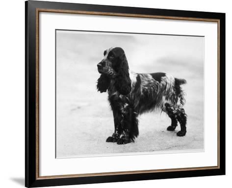 Tracey Witch of Ware Breed--Framed Art Print