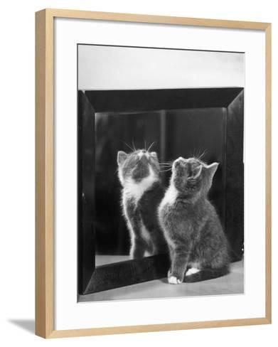 This Small Grey and White Kitten Stares up at the Ceiling While Sitting Next to a Large Mirror-Thomas Fall-Framed Art Print