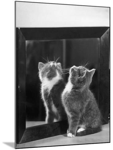 This Small Grey and White Kitten Stares up at the Ceiling While Sitting Next to a Large Mirror-Thomas Fall-Mounted Photographic Print