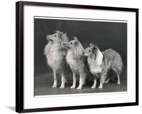 Three Dogs Standing Together--Framed Art Print