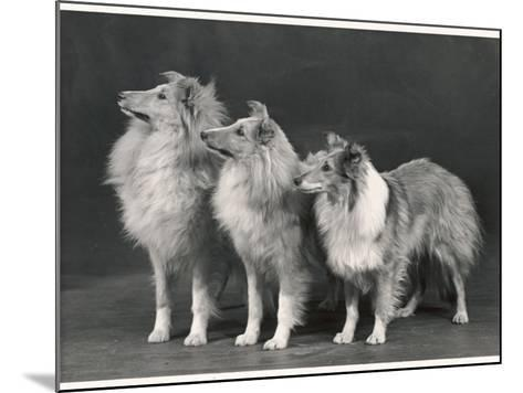 Three Dogs Standing Together--Mounted Photographic Print
