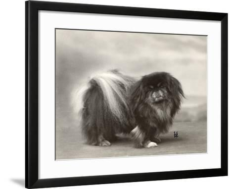 Champion Chien Lung of Wybournes Owned by Mrs Bevington--Framed Art Print