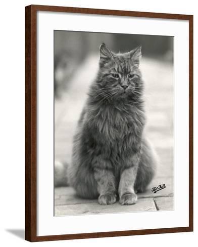 Fluffy Domestic Cat Sitting on the Pavement-Thomas Fall-Framed Art Print