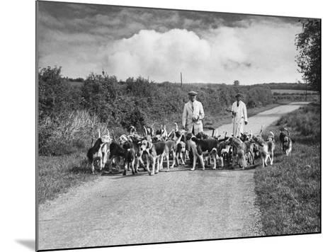 Two Kennel Workers Exercising Foxhounds on an English Country Lane--Mounted Photographic Print