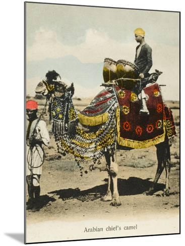 Aden, Yemen - Chieftain's Camel--Mounted Photographic Print
