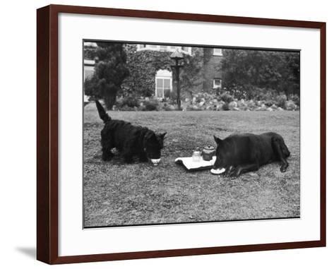 Doggie Afternoon Tea--Framed Art Print