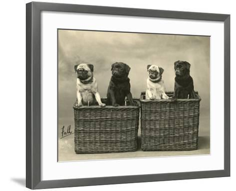 Pug 1926--Framed Art Print