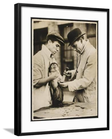 A Veterinary Surgeon and His Assistant Test a Monkey's Lungs at the Zoo Hospital--Framed Art Print