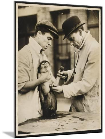 A Veterinary Surgeon and His Assistant Test a Monkey's Lungs at the Zoo Hospital--Mounted Photographic Print