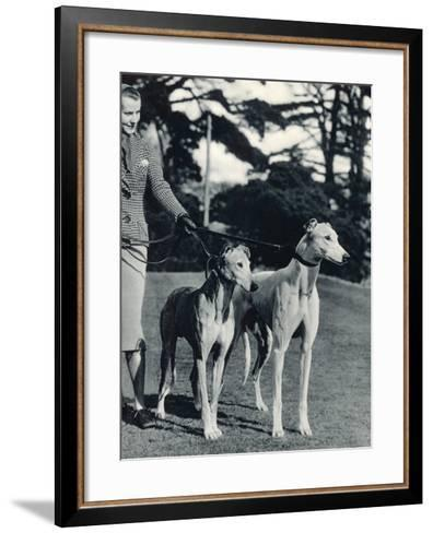 A Smart Young Woman Taking Two Magnificent, Muscular Greyhounds for their Daily Exercise--Framed Art Print