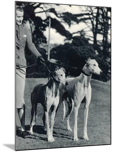 A Smart Young Woman Taking Two Magnificent, Muscular Greyhounds for their Daily Exercise--Mounted Photographic Print
