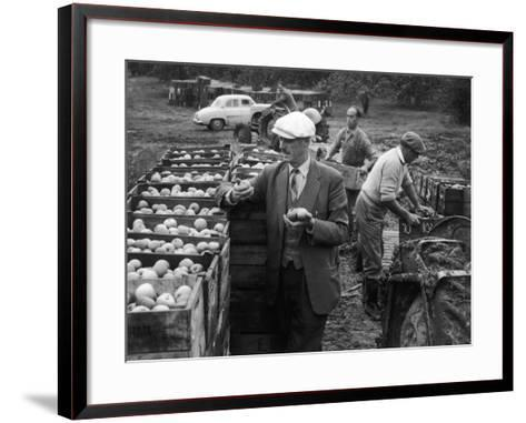 Harvesting Apples--Framed Art Print
