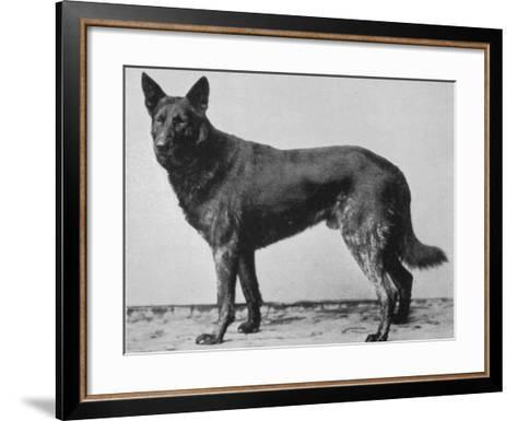 German Shepherd Beowulf--Framed Art Print