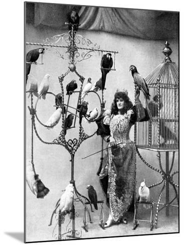 Madame Marzella with Her Pets, at the Tivoli, 1896--Mounted Photographic Print