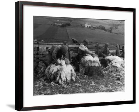 Sheep Shearing at Carbost, Isle of Skye, Scotland--Framed Art Print