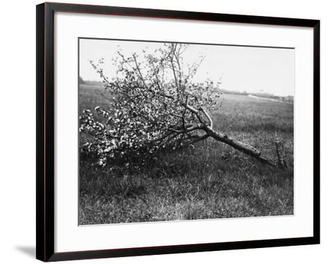 Nature Recovers 1917-Robert Hunt-Framed Art Print