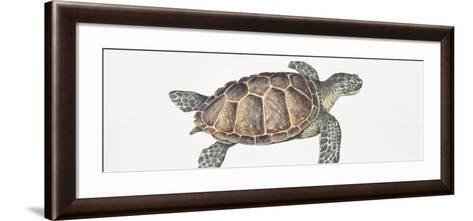Green Turtle (Chelonia Mydas), Illustration--Framed Art Print