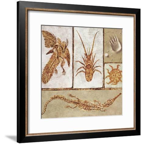 Close-Up of Various Fossils--Framed Art Print