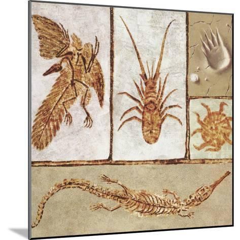 Close-Up of Various Fossils--Mounted Photographic Print