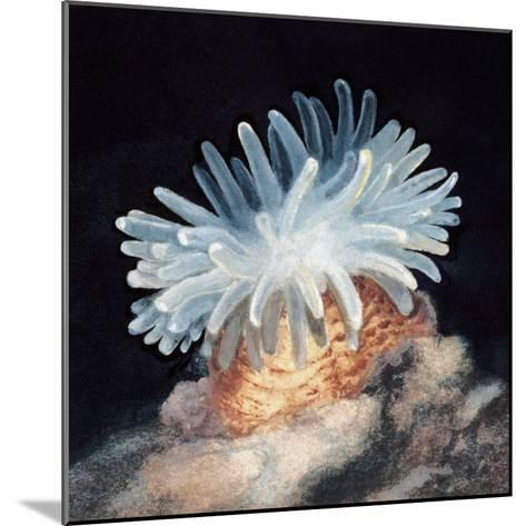 Close-Up of a Sea Anemone--Mounted Photographic Print