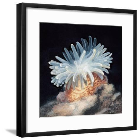 Close-Up of a Sea Anemone--Framed Art Print