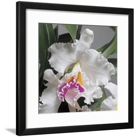 Close-Up of Cattleya Flowers-G^ Cigolini-Framed Art Print