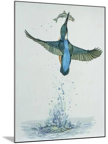 Close-Up of a Common Kingfisher Gripping a Fish (Alcedo Atthis)--Mounted Photographic Print