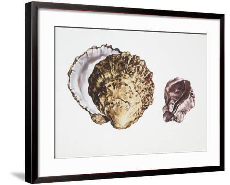 Saddle Oyster (Anomia Ephippium), Illustration--Framed Art Print