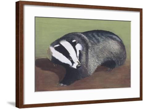 European Badger (Meles Meles), Illustration--Framed Art Print