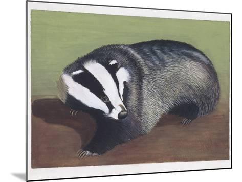 European Badger (Meles Meles), Illustration--Mounted Photographic Print