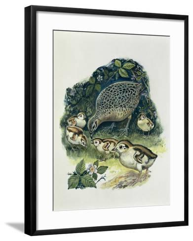 Close-Up of a Female Pheasant with its Young (Phasianus Colchicus)--Framed Art Print