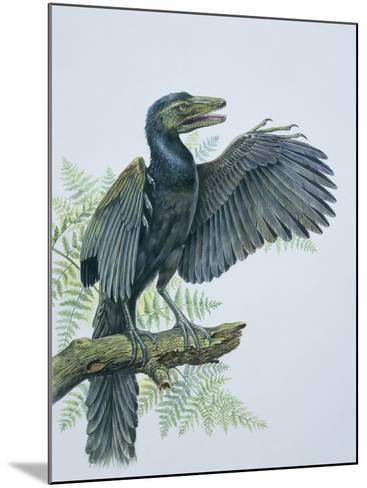 Close-Up of an Archaeopteryx Perching on a Branch (Archaeopteryx Lithographica)--Mounted Photographic Print