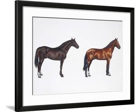 Kladruber Horse and Furioso-North Star Horse (Equus Caballus), Illustration--Framed Art Print
