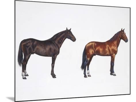 Kladruber Horse and Furioso-North Star Horse (Equus Caballus), Illustration--Mounted Photographic Print