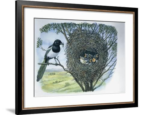 Close-Up of an Australian Magpie Holding an Insect for its Youngs--Framed Art Print