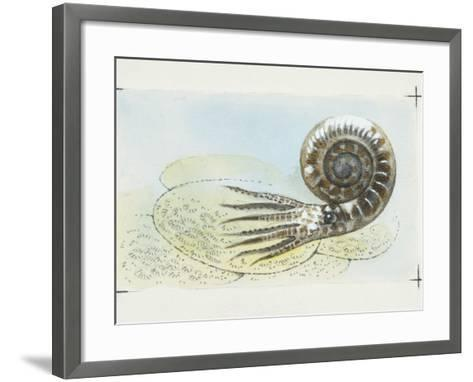 Fossils, Ammonite, Illustration--Framed Art Print