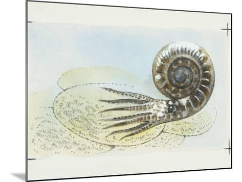Fossils, Ammonite, Illustration--Mounted Photographic Print