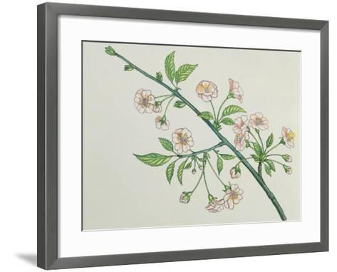Close-Up of Korean Cherry Blossoms on a Branch (Prunus Japonica)--Framed Art Print