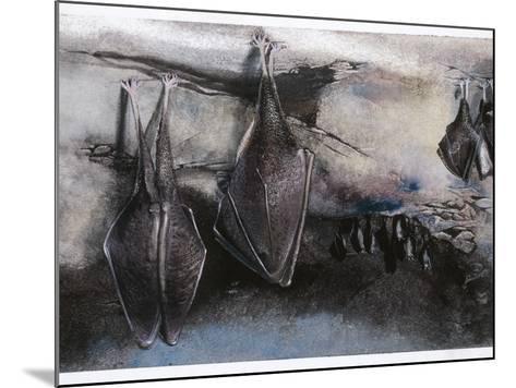 Greater Horseshoe (Bat Rhinolophus Ferrumequinum), Illustration--Mounted Photographic Print