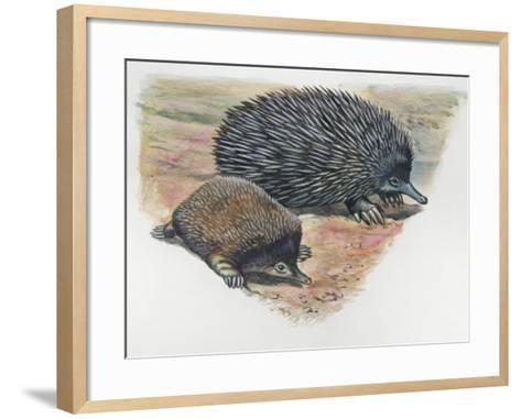 Close-Up of a Short-Beaked Echidna with its Young (Tachyglossus Aculeatus)--Framed Art Print