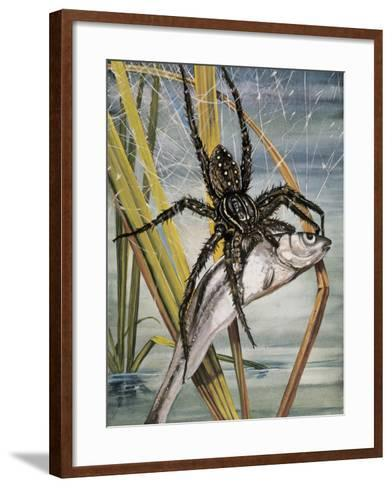 Close-Up of a Raft Spider Hunting a Fish (Dolomedes Fimbriatus)--Framed Art Print