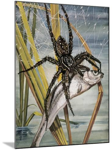 Close-Up of a Raft Spider Hunting a Fish (Dolomedes Fimbriatus)--Mounted Photographic Print