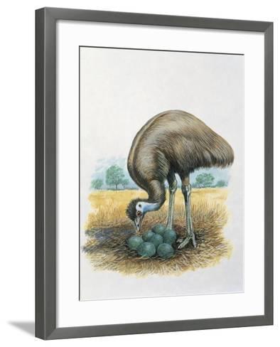 Close-Up of a Male Emu Standing Near Eggs--Framed Art Print