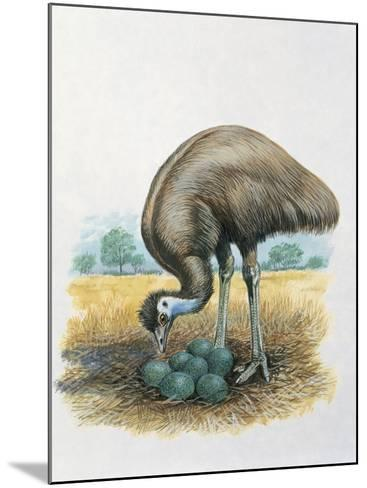 Close-Up of a Male Emu Standing Near Eggs--Mounted Photographic Print