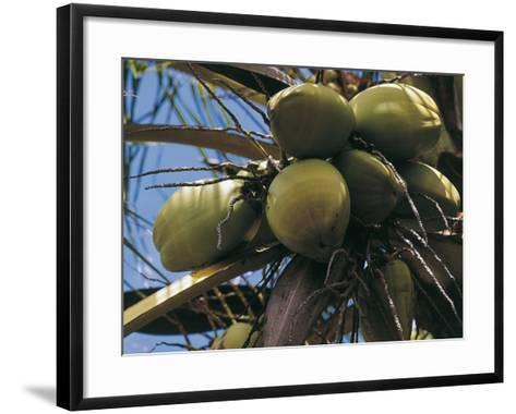 Low Angle View of Coconut Palm Trees (Cocos Nucifera)--Framed Art Print