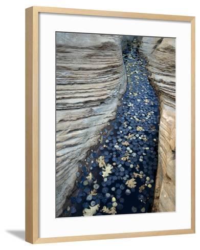 Fallen Autumn Leaves on Water Collecting in Sandstone, Colorado Plateau, Utah, Usa-Jeff Foott-Framed Art Print