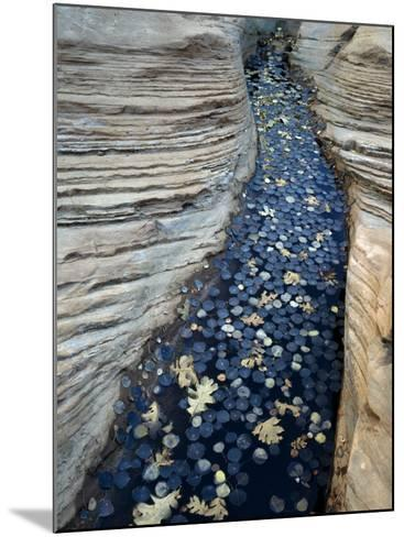 Fallen Autumn Leaves on Water Collecting in Sandstone, Colorado Plateau, Utah, Usa-Jeff Foott-Mounted Photographic Print