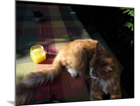 Orange Cat at a Picnic-Krystal South-Mounted Photographic Print