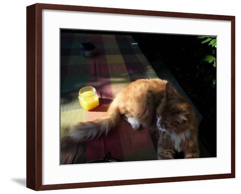 Orange Cat at a Picnic-Krystal South-Framed Art Print